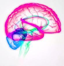 Cerebro disléxico